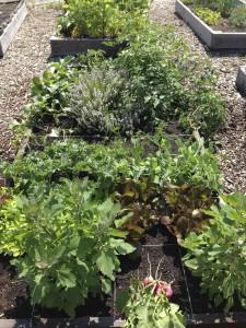 Global Garden Plot